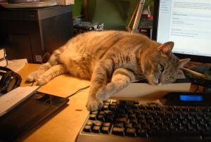 Jimmy hilft beim Schreiben
